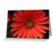 Gerbera daisy cards