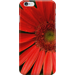 Gerbera daisy iphone