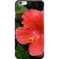 Hibiscus iphone sq