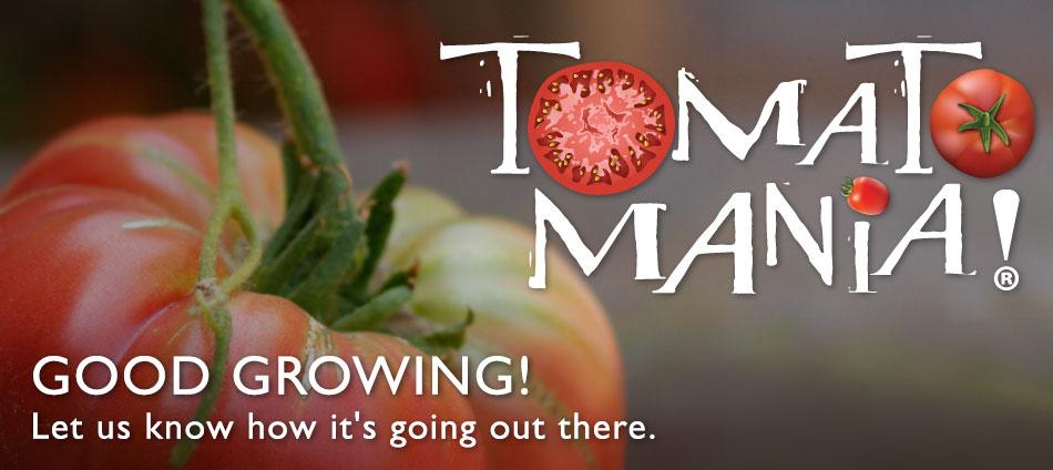 tomatomania-2015b