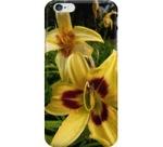 Daylily iphone