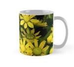 Aeonium mug