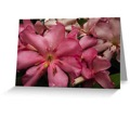 Pink rhododendron cards