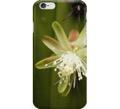 White cactus iphone