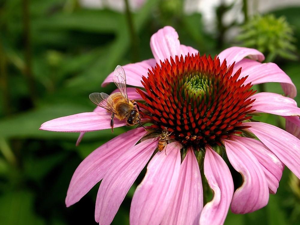 bee-gather