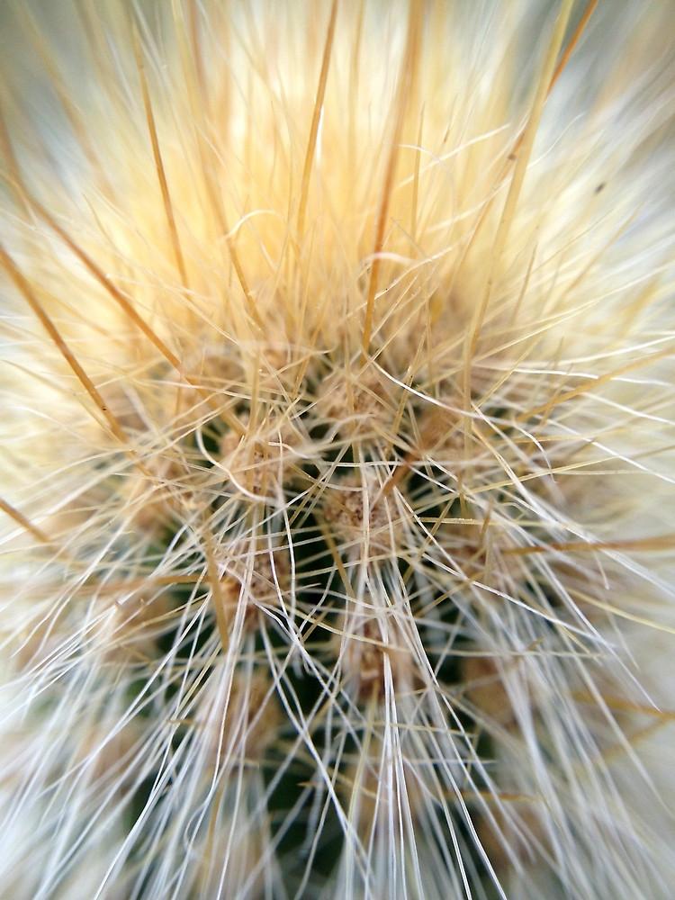 cactus-original