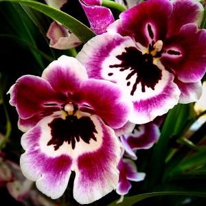 purple-orchid-ig