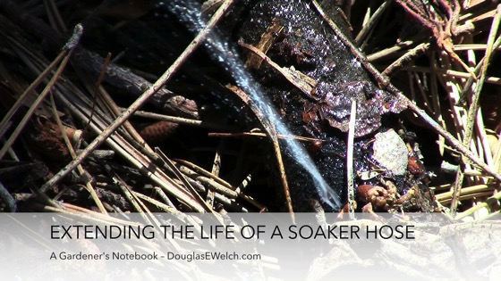 Video: Tip: A fix to extend the life of a soaker hose from A Gardener's Notebook