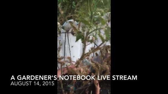 A Gardener's Notebook Live Stream - August 14, 2015  (19 mins)
