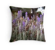 Laveder field pillow