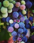 Grapes in the neighborhood