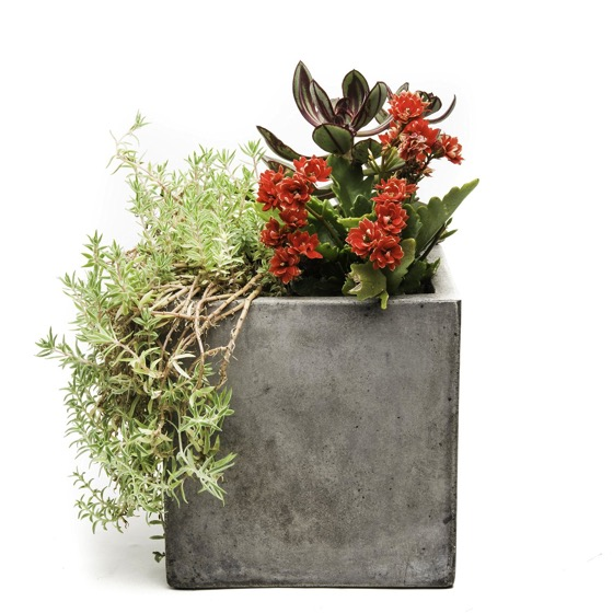 Cast concrete planter