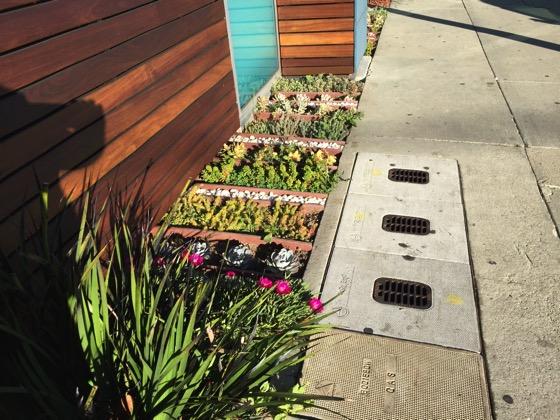 Succulent beds 1
