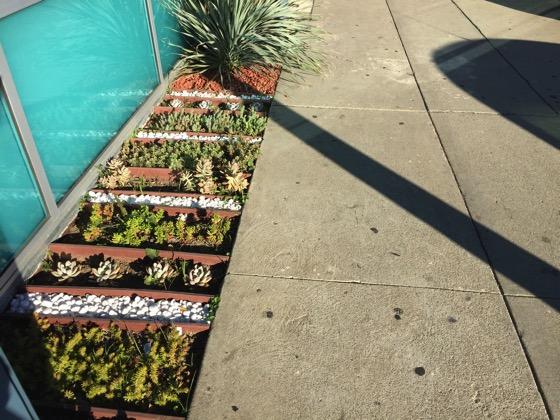 Succulent beds 2
