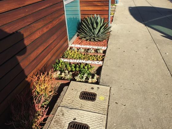 Succulent beds 3
