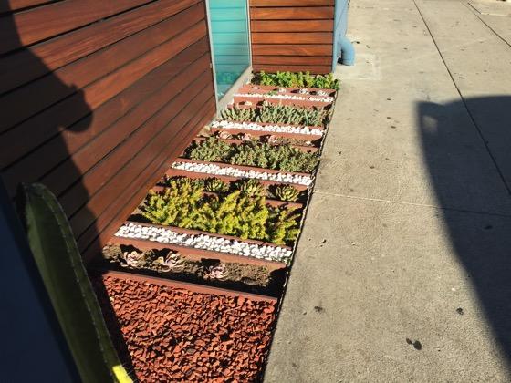 Succulent beds 4