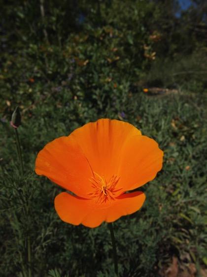 A Quick Visit to Arlington Garden, Pasadena, California