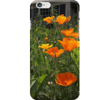 Calpoppy rb iphone