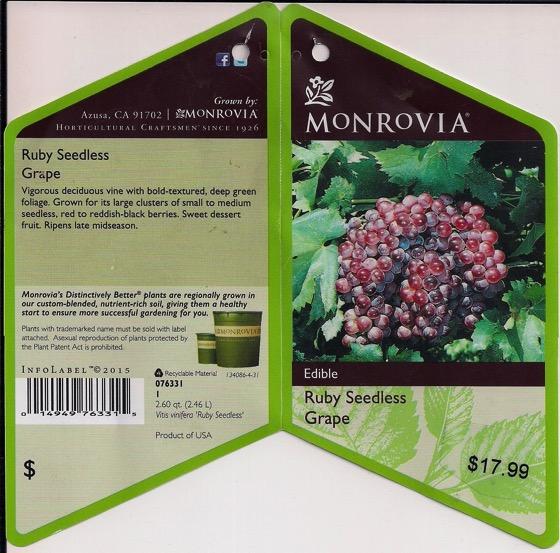 Monrovia grape 1
