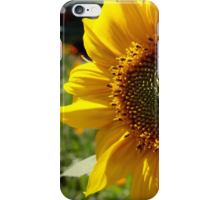 Sunflower 2016 iphone