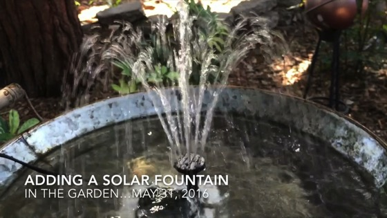 In The Garden...May 31, 2016: Adding A Solar Fountain