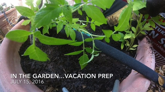 In The Garden...July 15, 2016: Vacation Prep from A Gardener's Notebook