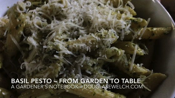 Basil Pesto: From Garden to Table - A Gardener's Notebook