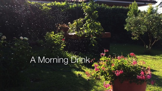 A Minute in the (Sicilian) Garden 41 - A Morning Drink