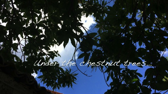 Under the chestnut trees...A Minute in the (Sicilian) Garden 44 [Video] (1:00)