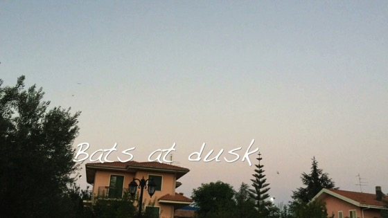 Bats at Dusk - A Minute in the (Sicilian) Garden 45