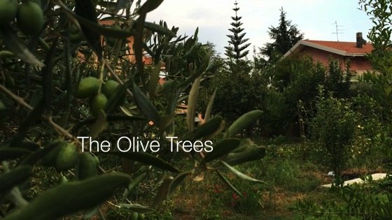 The Olive Trees - A Minute in the (Sicilian) Garden 46 from A Gardener's Notebook