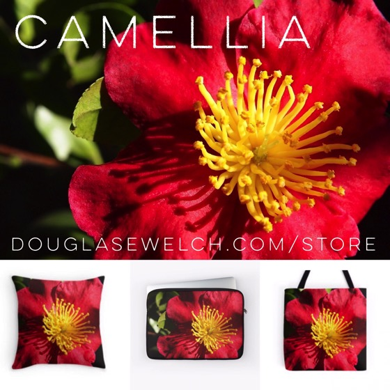 Brighten your fall and winter with these Camellia products exclusively from DouglasEWelch.com/store #flowers #garden #camellia #nature #products #home #technology #arts #crafts #clothing