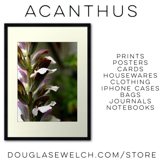 Acanthus Flowers Prints and More! Shop now at DouglasEWelch.com/store #garden #flowers #nature #plants #products #acanthus #home #housewares #technology #clothing #iphone #journals #notebooks