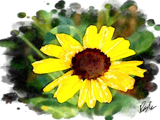 Canyon Sunflower via @paintlogue #flowers #nature #watercolor #paintlogue #paintlogue