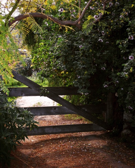 Down by the gate #gate #garden #plants #nature #outdoors #rustic