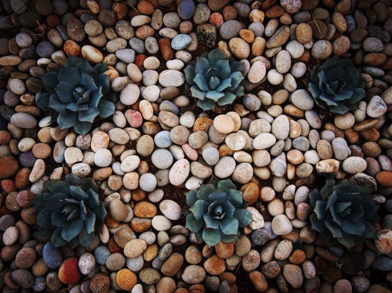 Succulent Garden Bed Pretty little succulents all in a row in Palm Desert, California.