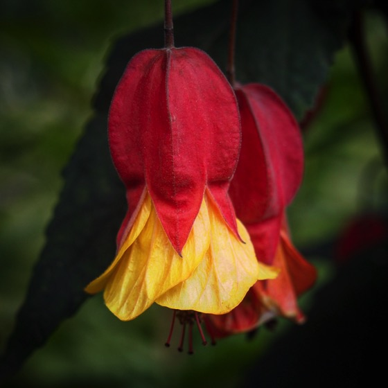 Red and Yellow Bells