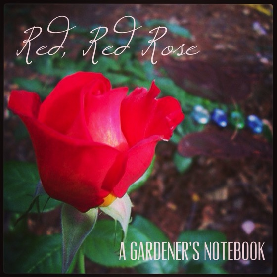 Res, Red, Rose from A Gardener's Notebook