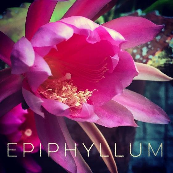 Epiphyllum Flower