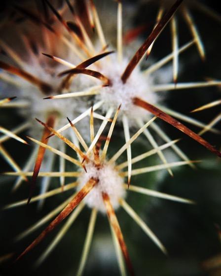 Cactus macro 2