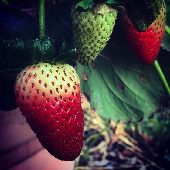 Almost ready... 🍓🍓🍓via Instagram