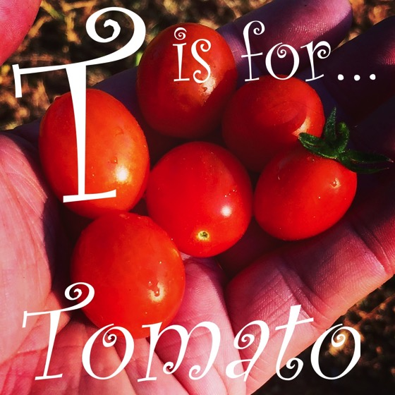 Garden Alphabet: T is for...Tomato