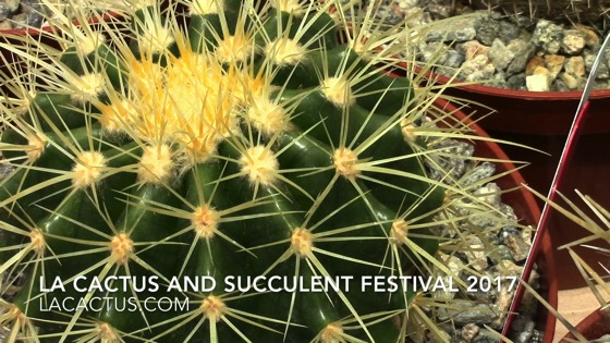 Cactus - Los Angeles Cactus and Succulent Society Festival 2017