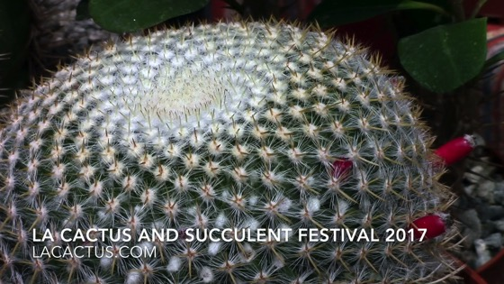Cactus 2 - Los Angeles Cactus and Succulent Society Festival 2017