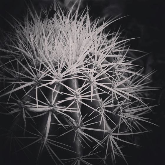 Barrel Cactus in Black and White