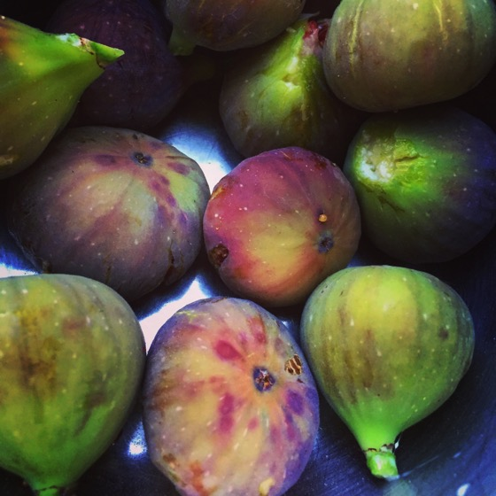 Figs gathered in the garden yesterday