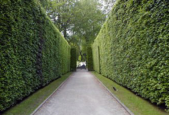 7 Excellent Screening Hedges/Trees from Garden of Eva