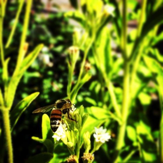 Worker Bee 🐝via Instagram