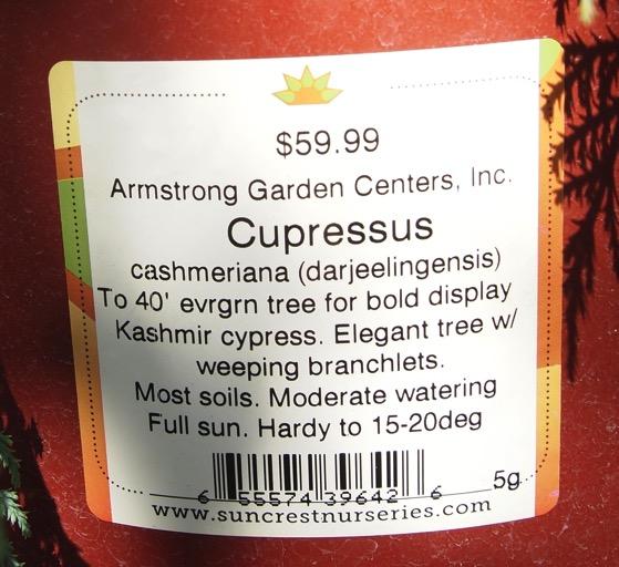 Cypress tag