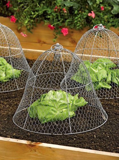 Garden Hacks: 10 Ideas for Wire Cloches via Gardenista